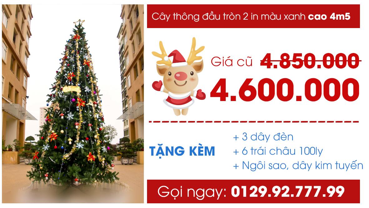 cay-thong-mau-xanh-2-in-4m5