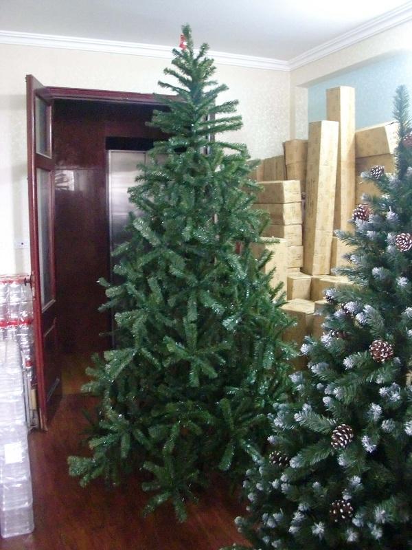 Thông Đẹp địa chỉ cung cấp cây thông noel uy tín, chất lượng