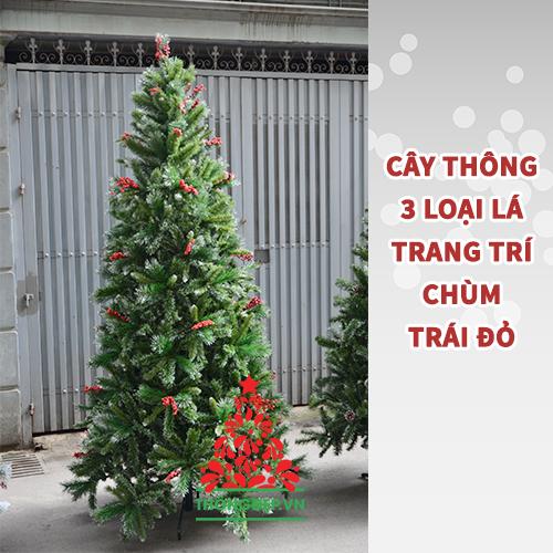 Cây thông cao 3m màu xanh luôn đắt hàng dịp Giáng sinh