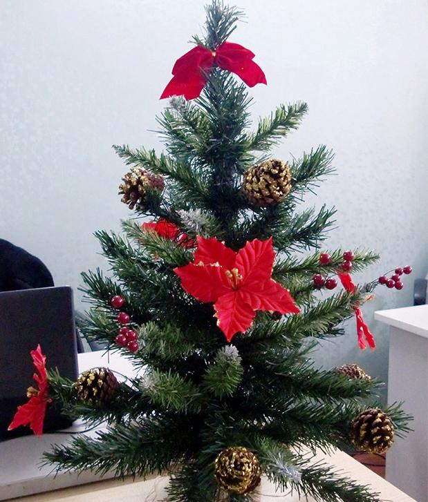 Cây thông Noel nhỏ 2 loại lá tại Thông Đẹp