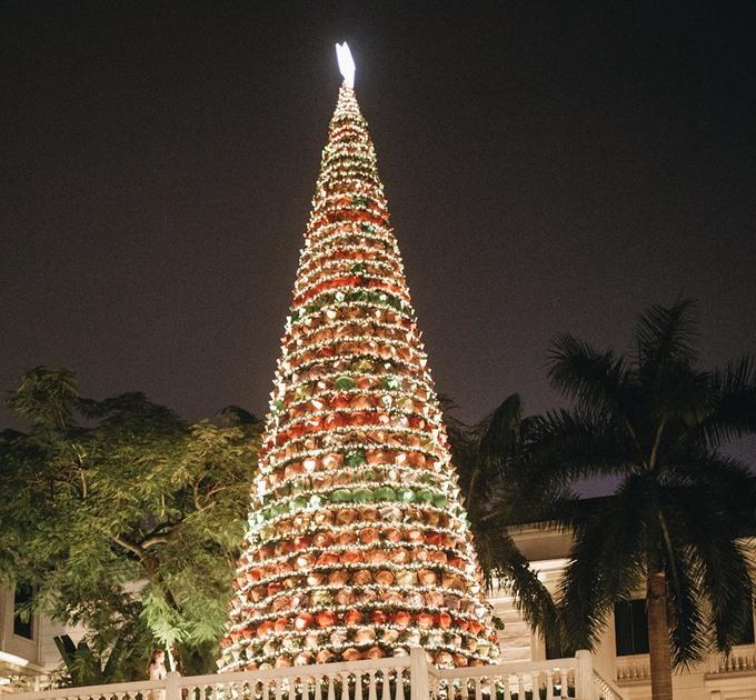 Thông Noel cỡ lớn