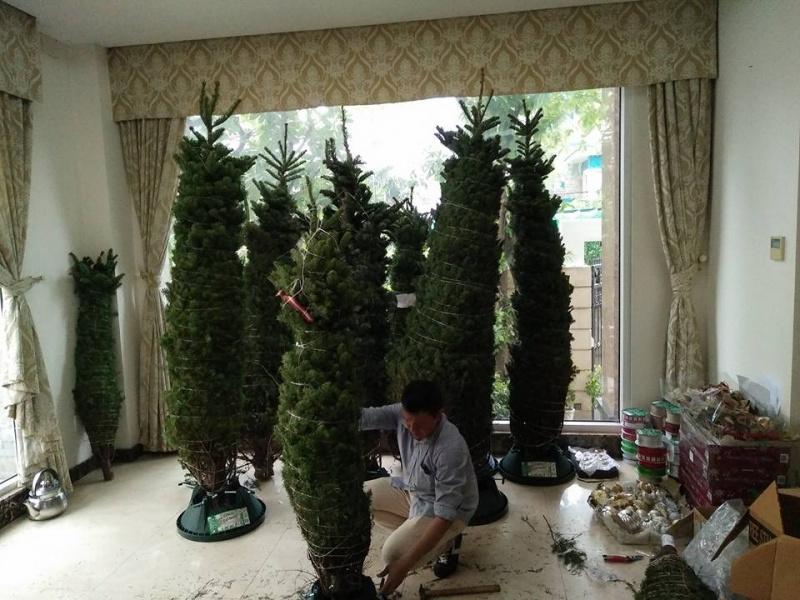 Có nên mua cây thông Noel thật? Làm gì để cây tươi lâu?